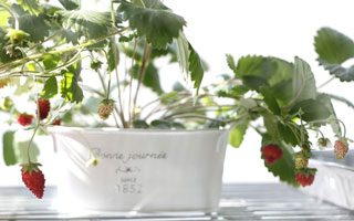 Little Garden